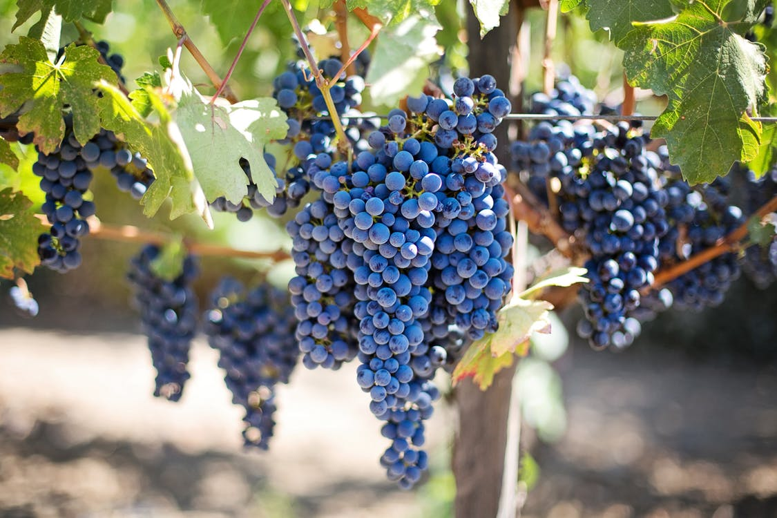 Montepulciano d'Abruzzo is a full-bodied red wine enjoyed with Abruzzo cuisine